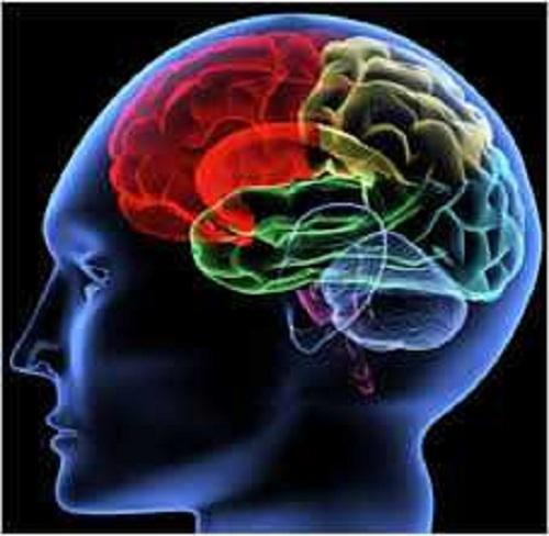 Your Lizard Brain and the AI Triune: Use Case of Autonomous