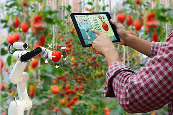 The Environmental Impacts of AI and IoT In Agriculture 1