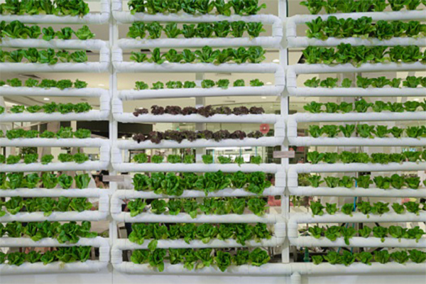 AI Being Applied in Agriculture to Help Grow Food, Support New Methods 1