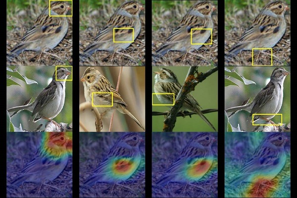 Duke University Researchers Showing AI Can Be for the Birds 1